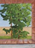 Bäume vorm Fenster in Naurod