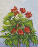 Topfblumen