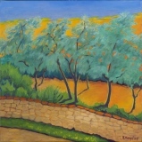 Olivenbäume in der Abendsonne