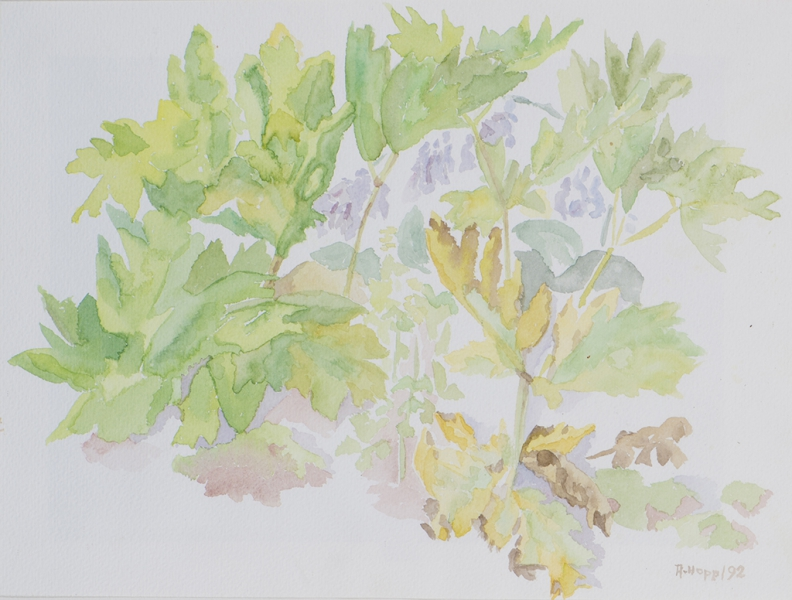 Herkules Blätter